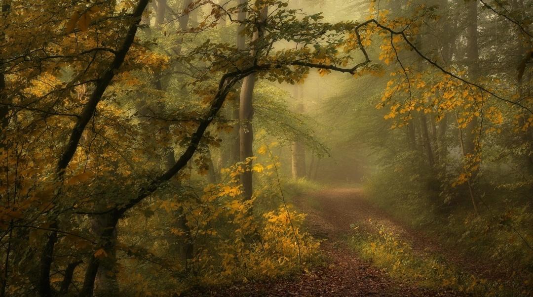 Floresta, Norbert Maier