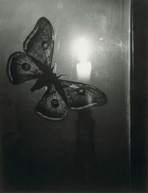 Foto: Gyula Halász